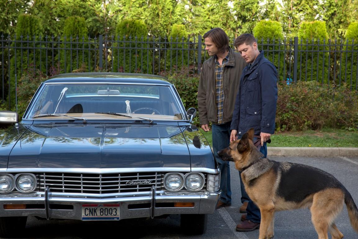Supernatural - Season 9 Episode 05: Dog Dean Afternoon
