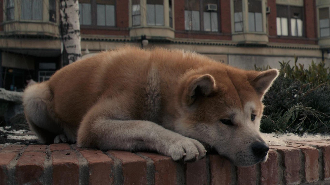 hachiko full movie 123movies